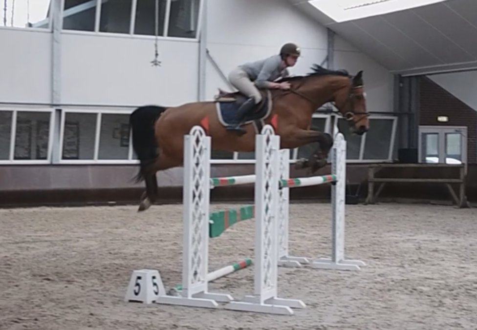 show jumper for sale