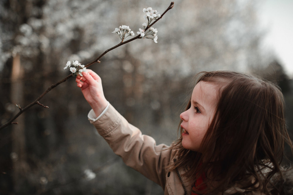 Young girl reaches above her to touch a white flower on a tree in Ashburn, Virginia