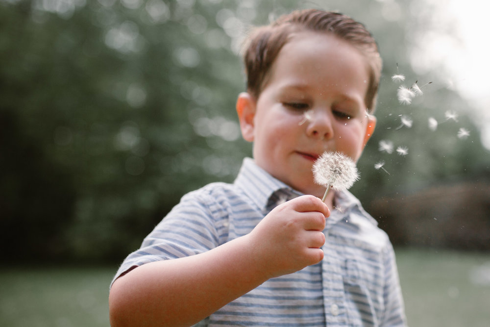 Toddler blowing dandelion at Aldie Mill Lifestyle Family Photography