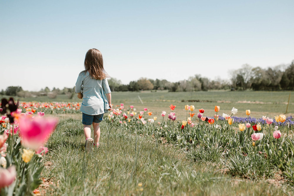 Toddler in a blue dress walking through burnside farms field of flowers lifestyle childhood photography