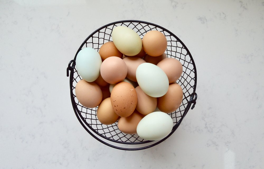 farm fresh eggs, why we homestead