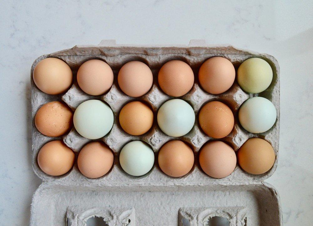 fresh eggs, backyard chickens