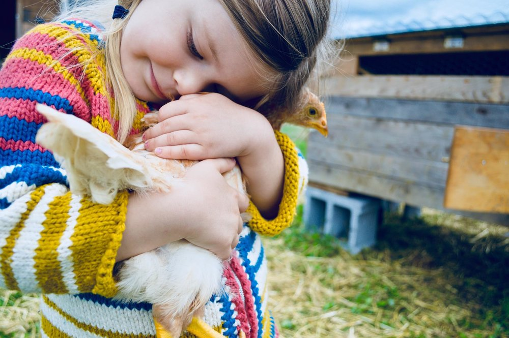 wildschooling, farm kid, animal lover, backyard chicken