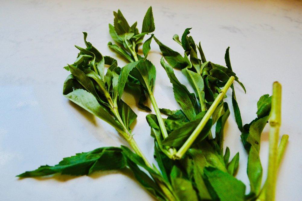 tarragon, salad, herbs, kitchen garden