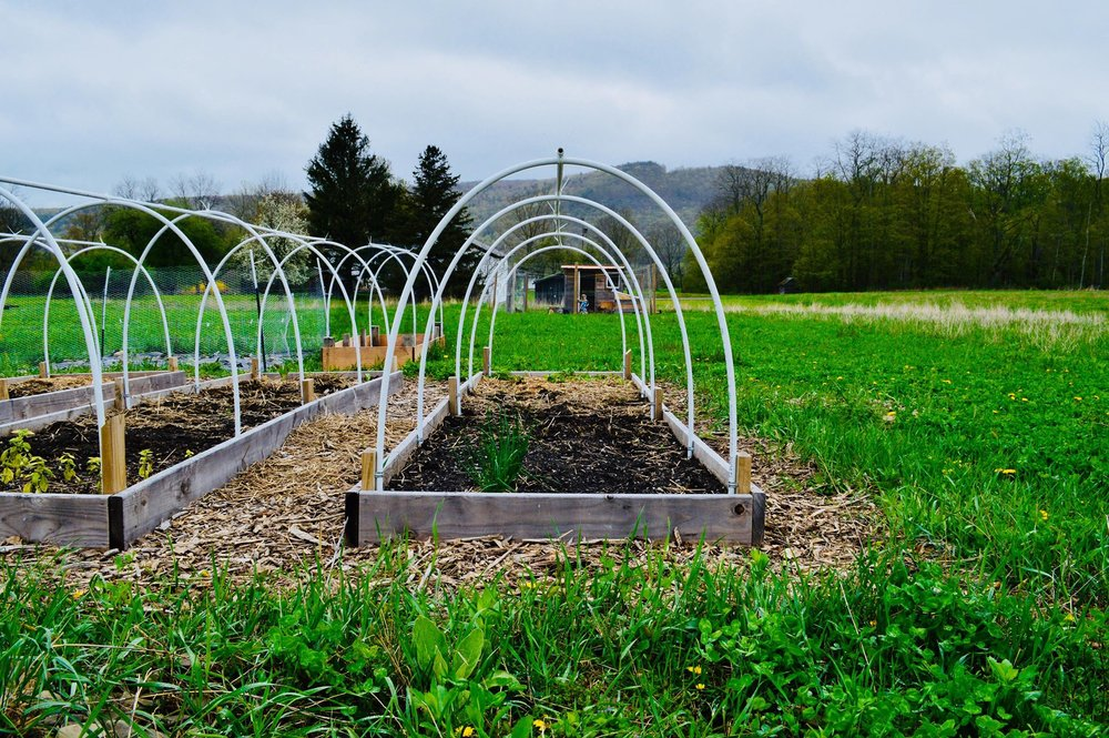 garden, hoop house, row covers, raised beds, vegetable garden