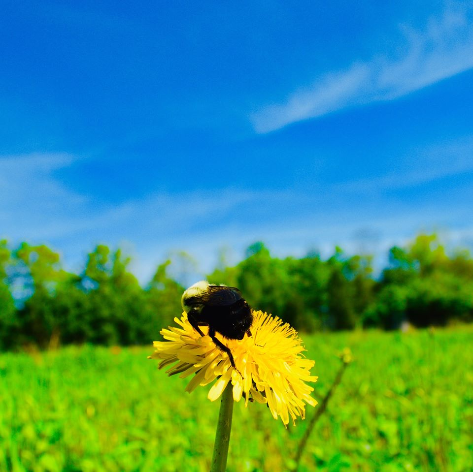 bees, bumble bee, spring time, modern homestead, homesteading, farming