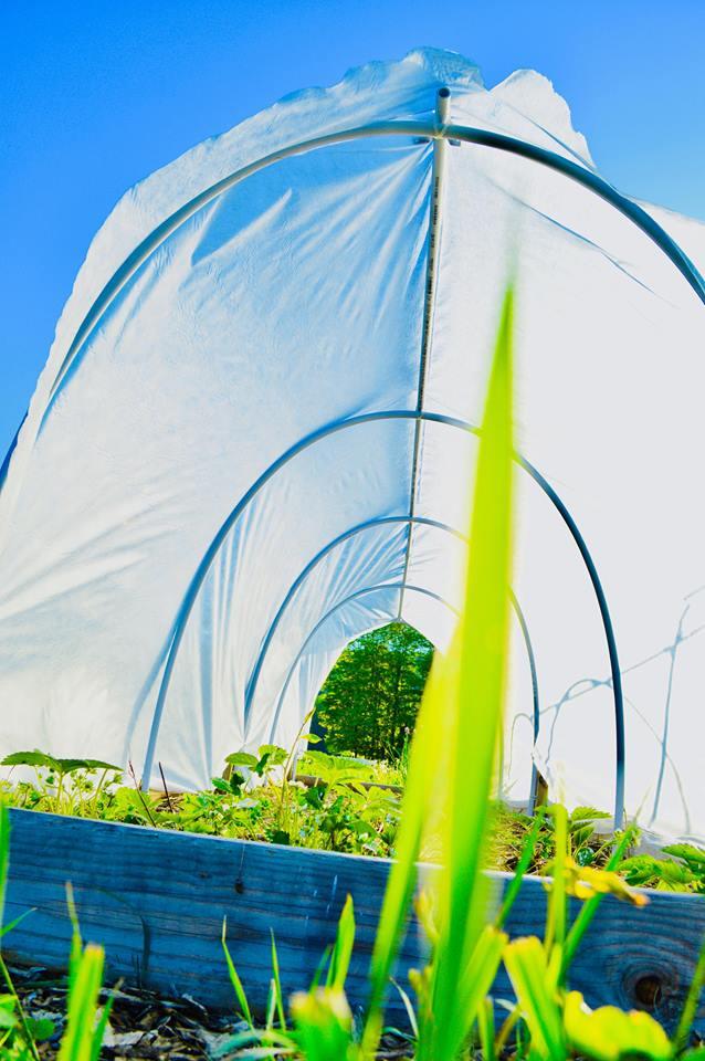 garden tunnel, raised bed, hoop house, greenhouse, polytunnel, pest control, deer netting, shade cloth, organic gardening, modern homestead, backyard garden, diy garden, microfarm