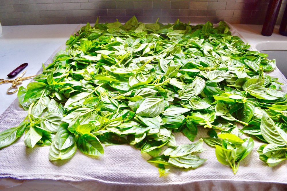 fresh pesto, garden pesto, plant based diet, clean eating, vegan family, garlic pesto, modern homestead, basil