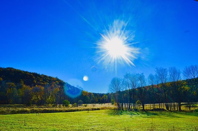 A clear autumn afternoon. All the leaves steadily fading to the ground.. 🍁 . . . #autumnleaves #afternoonsun #changingleaves #upstateny #sunnydays #bluesky #homesteadlife #slowliving #iamcoutryside #grateful