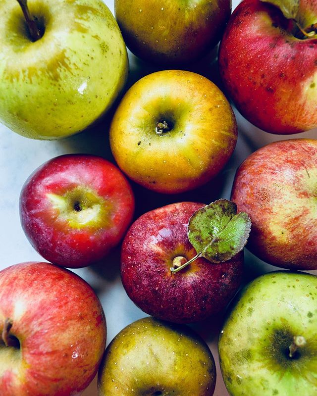 Autumn fruit 🍎🍂 the three of us ate over a bushel of #apples this past week. A bushel! That is ~40lbs folks. We are surrounded by orchards and they're divine. . . . #freshfruit #autumnfruits #pickyourown #farmfresh #locavore #honeycrisp #vegfoodie #plantbasedfamily #realfood #growfoodnotlawns #bestsnacks #vegkids #healthykiddos #foodofthegods #abushelandapeck