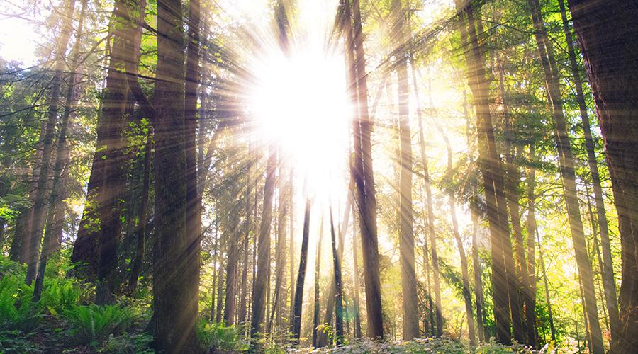 sun-shinging900.jpg