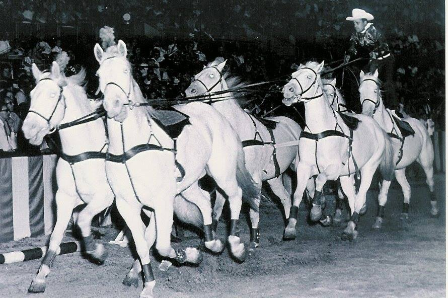 Don Anderson, Roman riding six white horses with the Texas White Horse Ranch at the Indianapolis Shrine Circus.