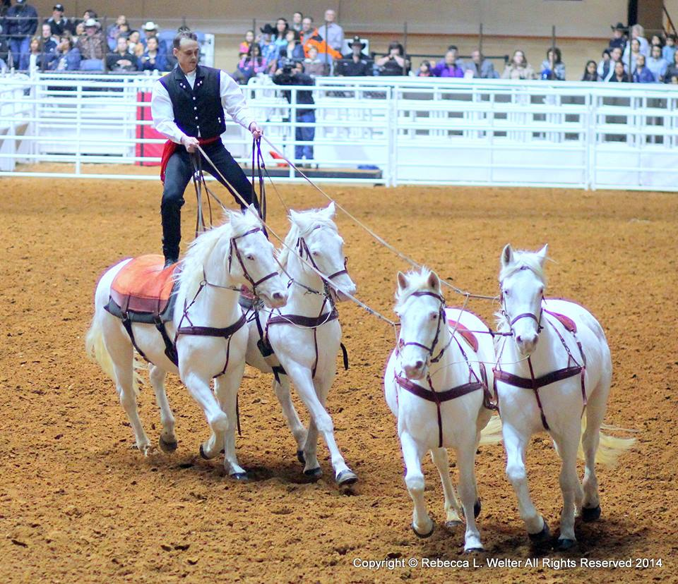 austin anderson roman riding 4 horses