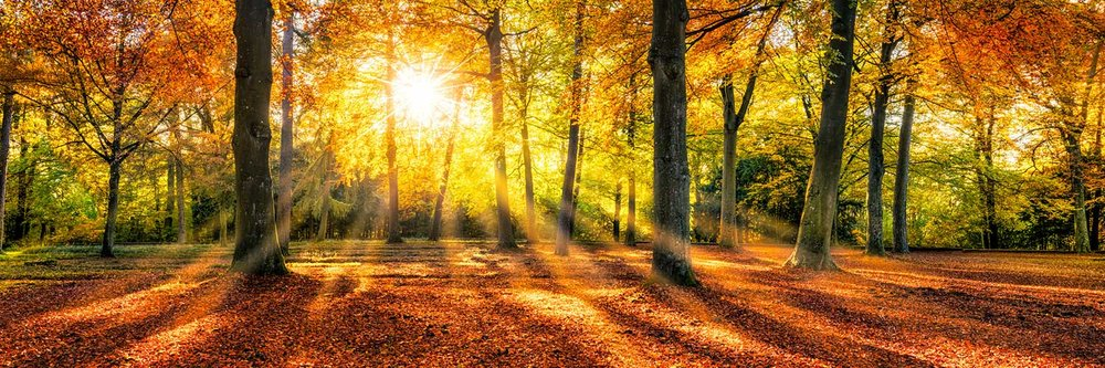 silent_walk_forest.jpg