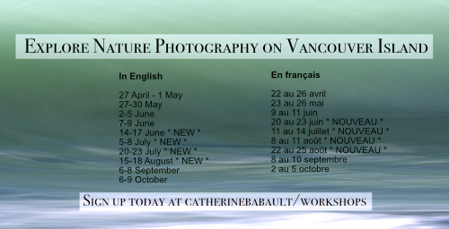 Vancouver Island Nature Photography Workshops