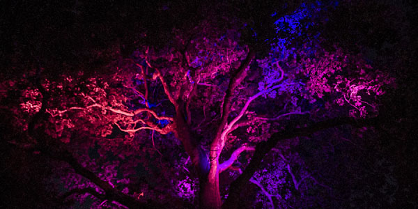 Breathing tree with lights