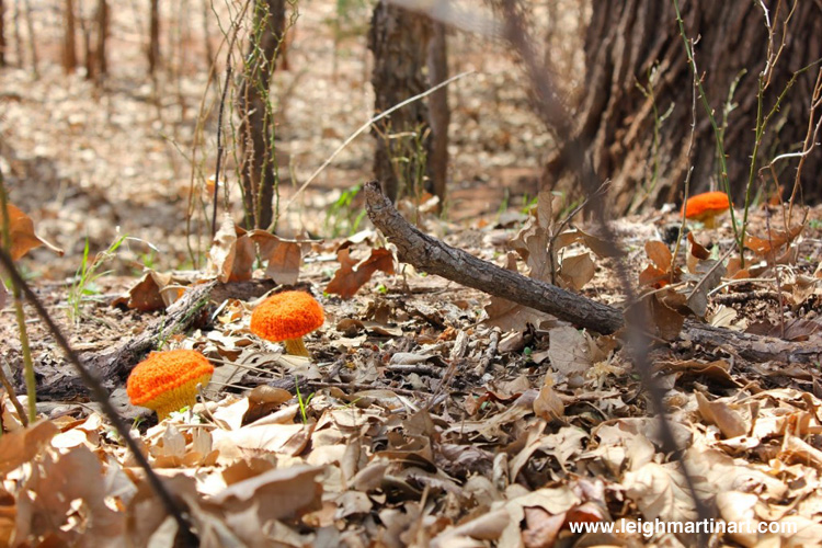 burnt-orange-bolete-1024x682