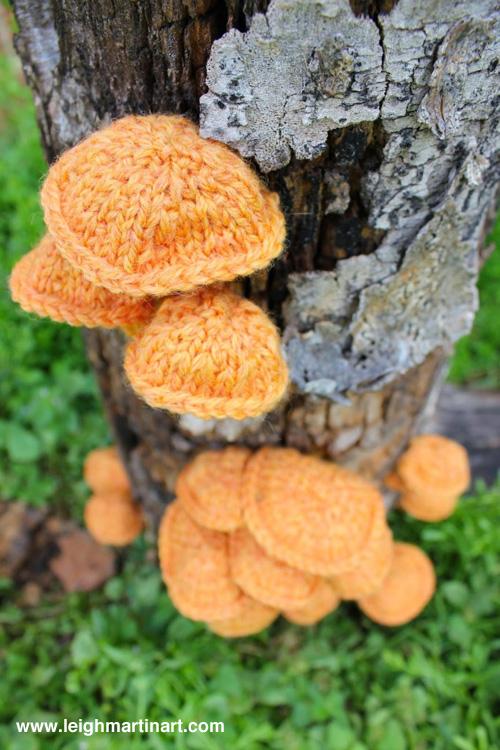 velvet-foot-fungus-1-682x1024