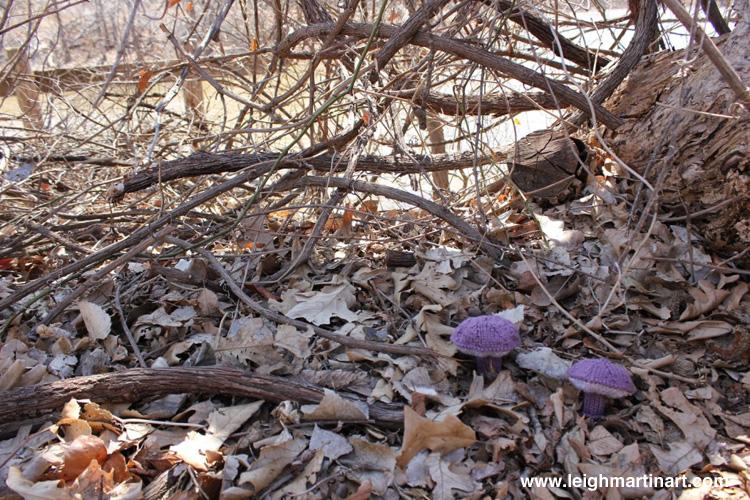 violet-gray-bolete-3-1024x682
