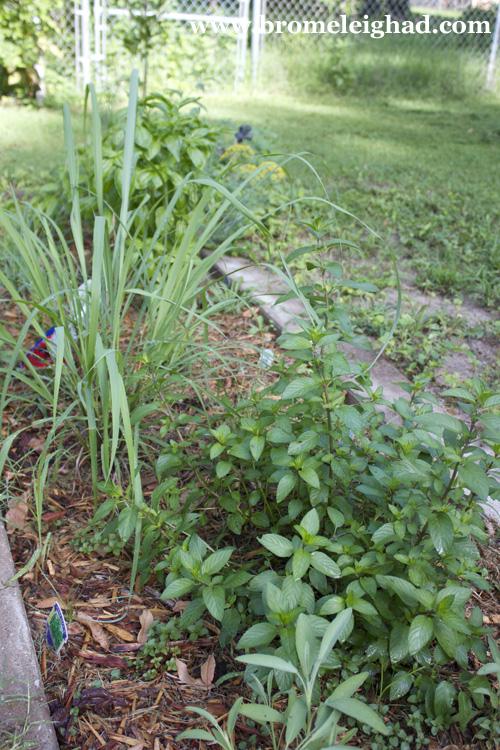 june garden 12