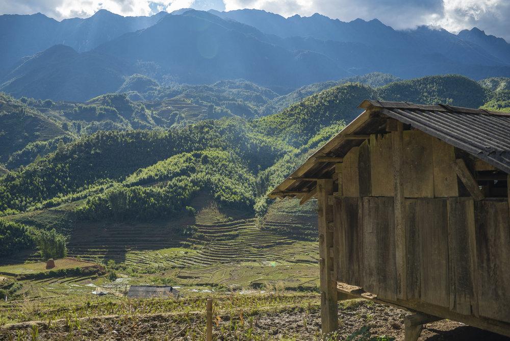 The house of the buffalo amidst terraced rice fields