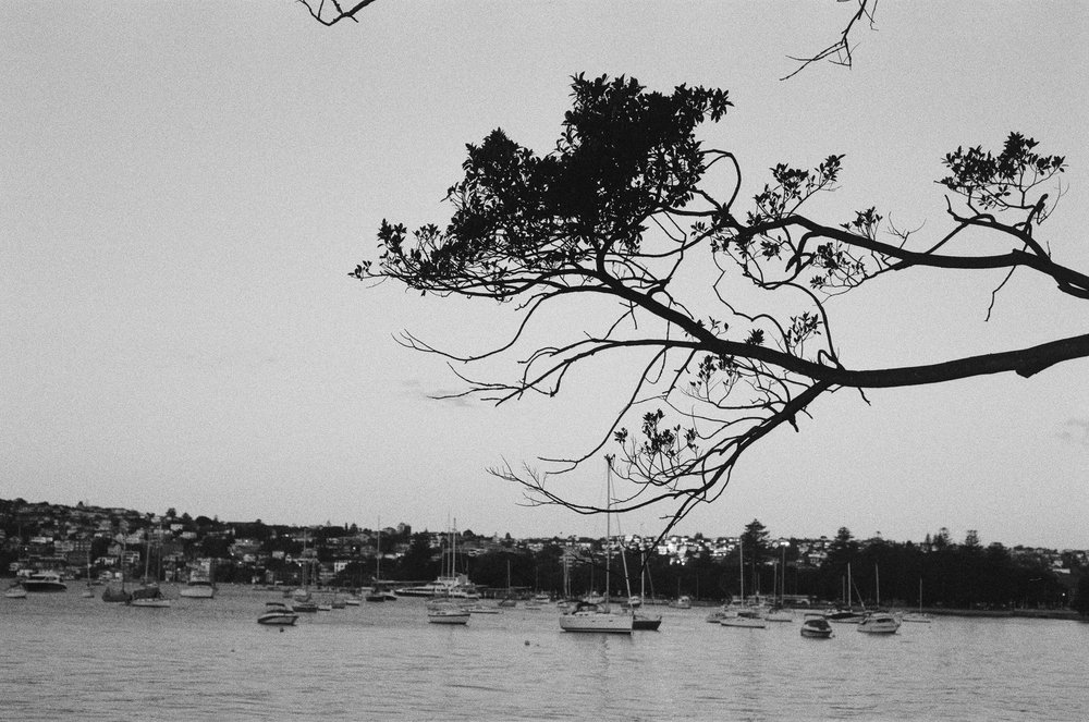 rose_bay_tree.jpg