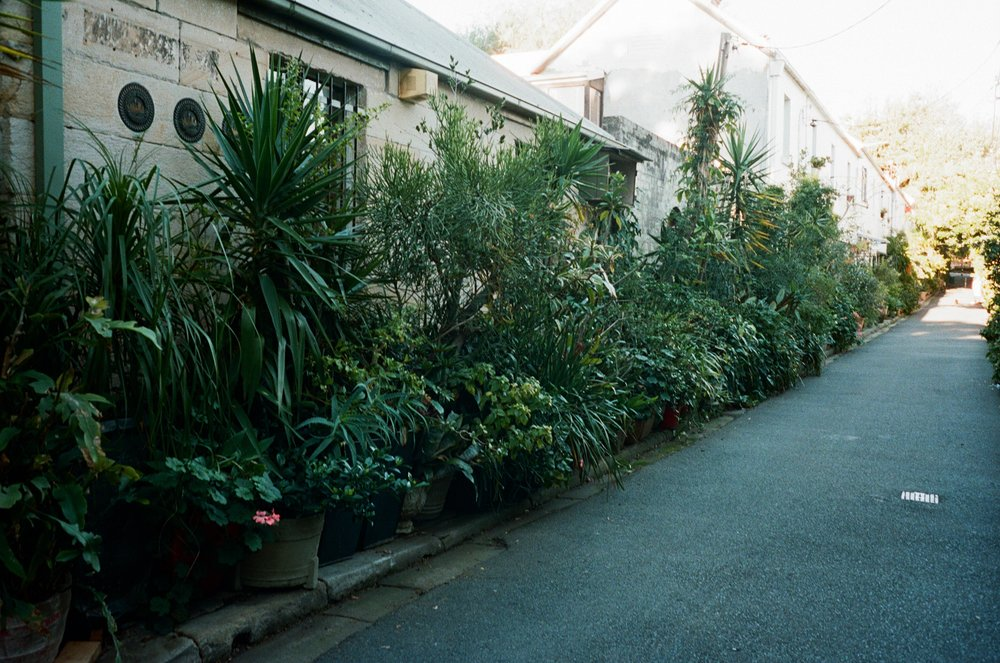 this is a little lane tucked away near the park. All the residents grow heaps of plants and vegetables.