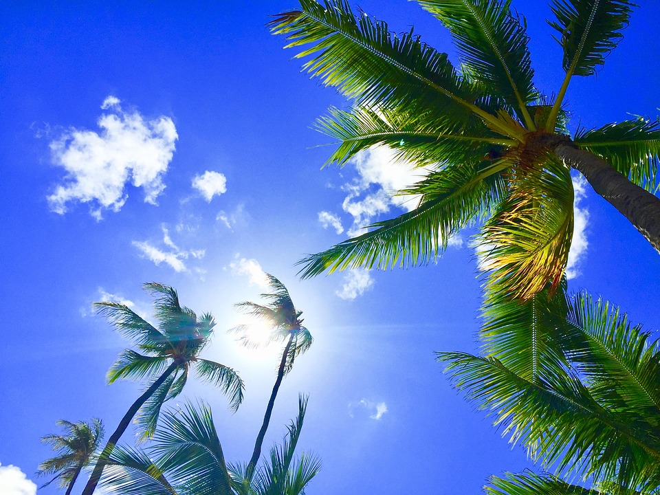 hawaii-2700190_960_720.jpg