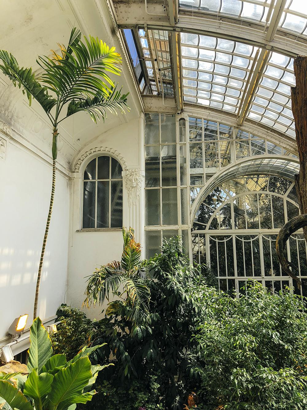 Vienna Butterfly house Stylesnooperdan 1.jpg