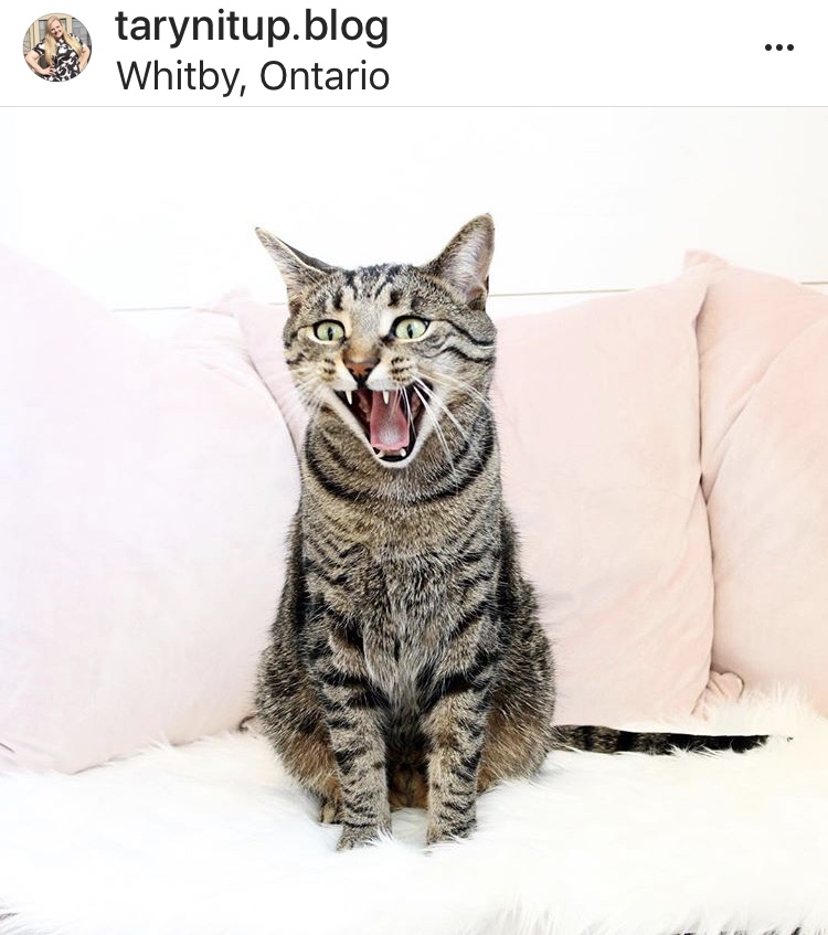 One of Taryn's Instagram famous kitties
