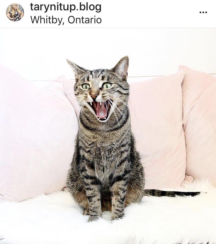 One of Taryn's Instagram famous kitties