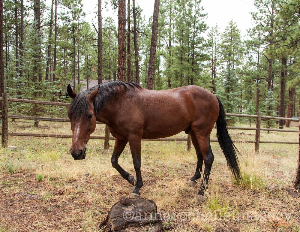 horses-greer-anna-rochelle-imagery-3.jpg
