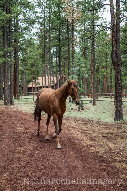 horses-greer-anna-rochelle-imagery-2.jpg