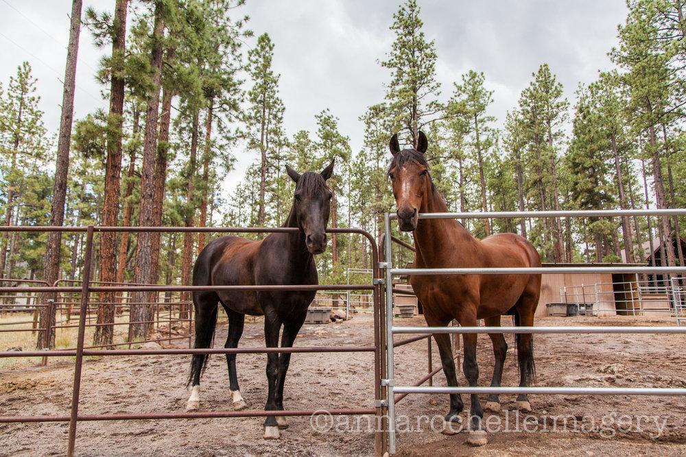 horses-greer-anna-rochelle-imagery-1.jpg
