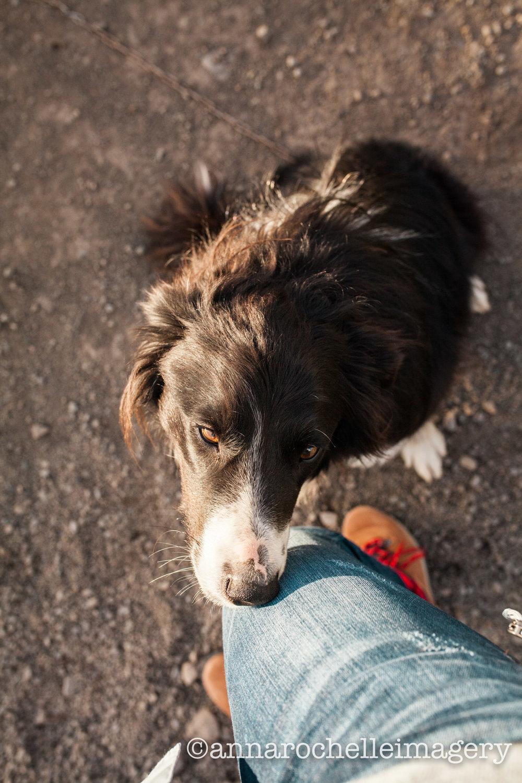dog-iceland-anna-rochelle-imagery-sheepdog-roadtrip-travel.jpg