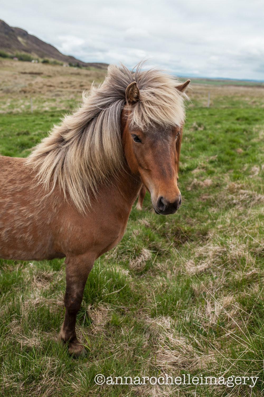 iceland-horses-anna-rochelle-imagery-travel-green.jpg