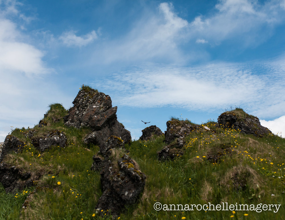 Bùdakirkja-hills-birds-wildflowers.jpg