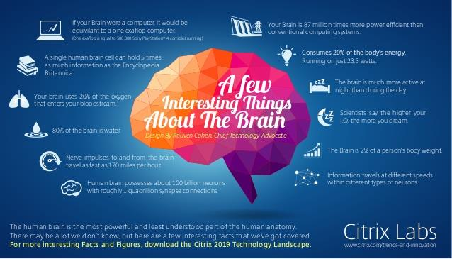 Interesting Things About the Brain (EN)