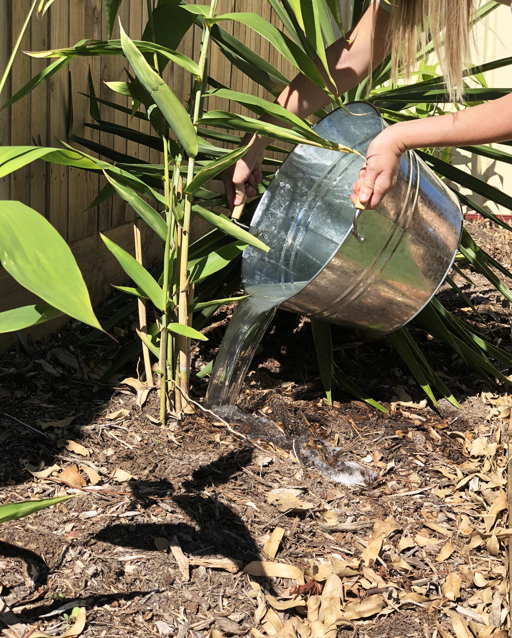 Watering_Plants_1.jpg