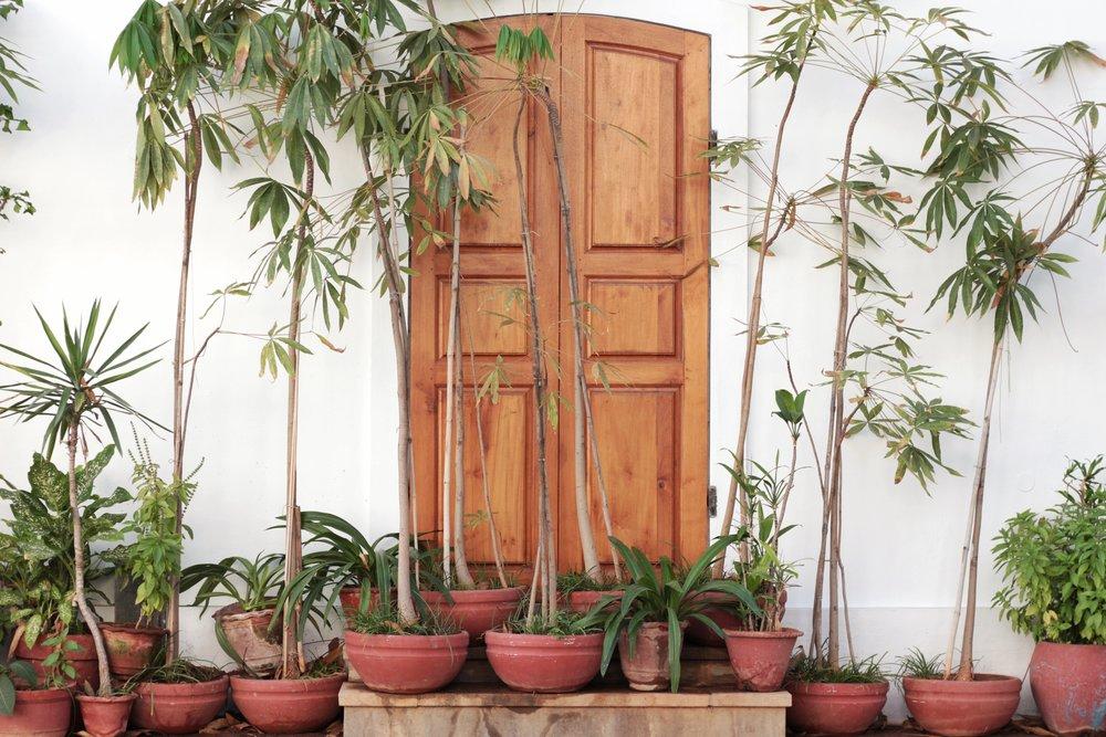 Plant Door