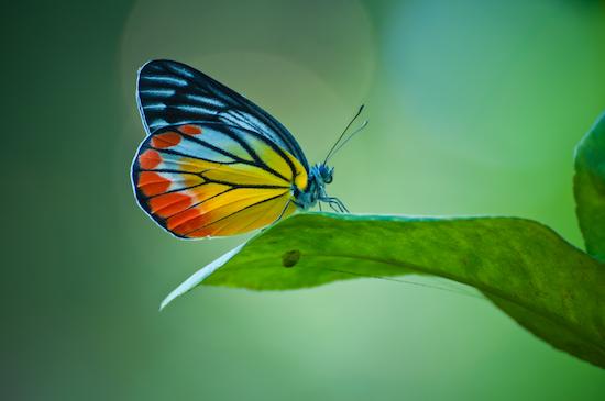 © Napalai Studio/Shutterstock.com