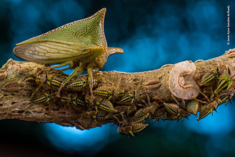 Mother Defender — © Javier Aznar González de Rueda / Wildlife Photographer of the Year