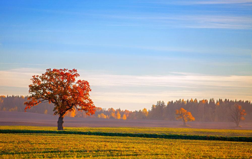 beautiful-autumn-landscape-PTPFKAH.jpg