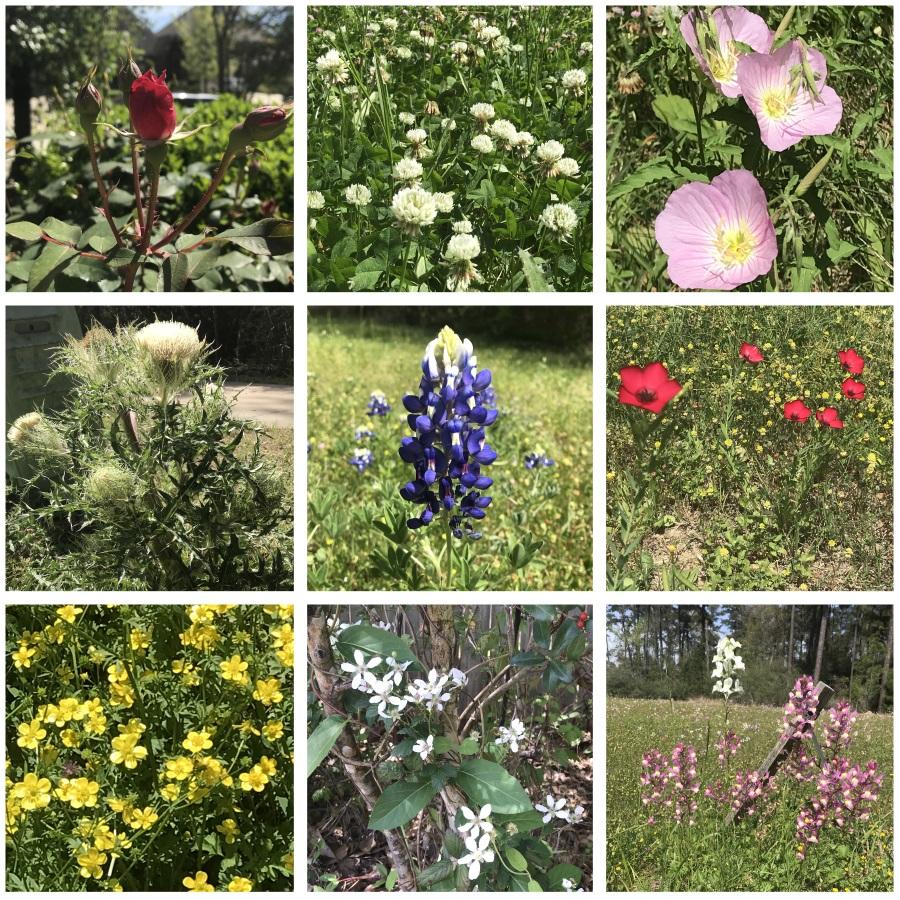 Wildflowers-sm.jpg