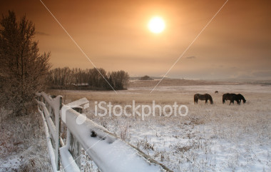 stock-photo-2426646-winter-on-the-ranch