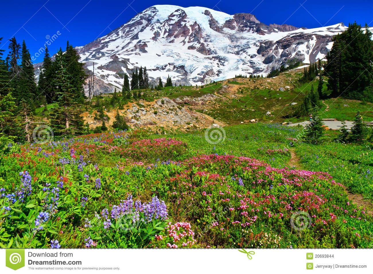 http://www.dreamstime.com/stock-images-summer-landscape-paradise-vista-mount-rainier-image20693844