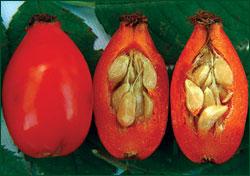 rosehip-seed