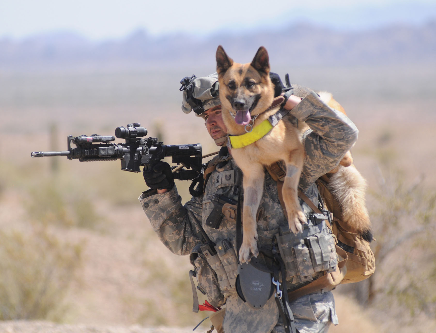 A-Salute-to-Military-Working-Dogs