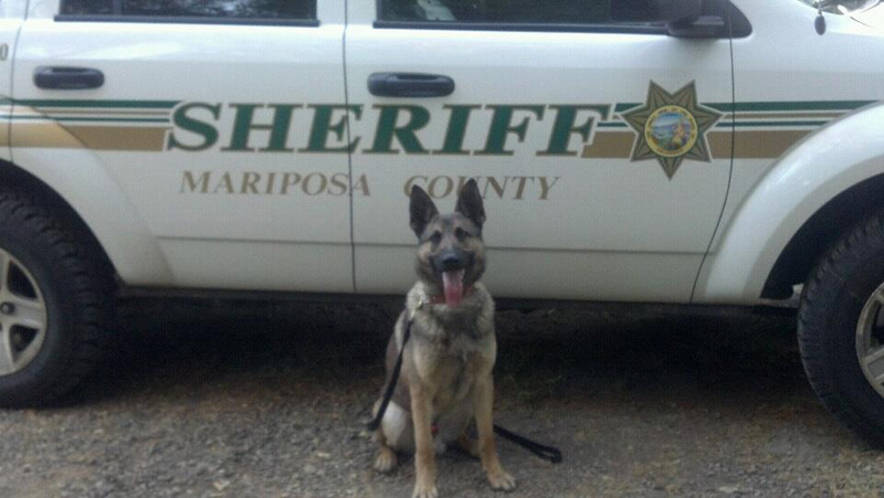 K9-Arthur-Mariposa-Sheriff-First-Day_800