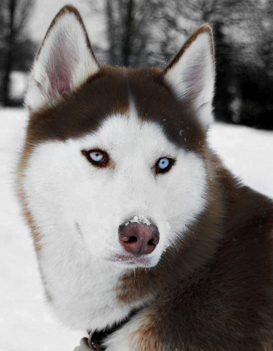 DrJasonKunik_dogform_HTWUAS
